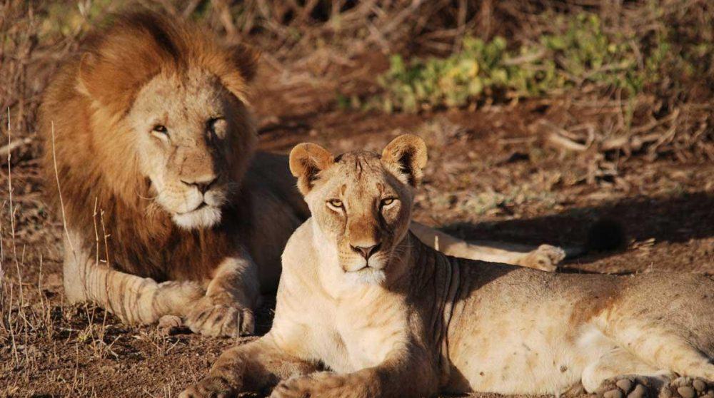 Découvrez Amboseli durant votre circuit dans le Nord du Kenya