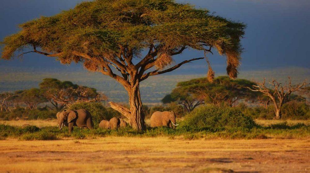Un paysage aux couleurs dorées à Amboseli