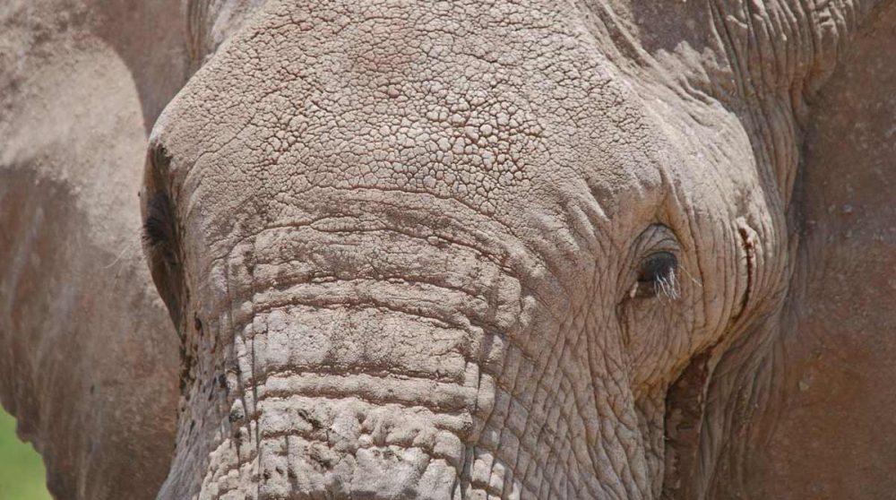 Découvrez Amboseli et ses éléphants durant votre circuit au Kenya