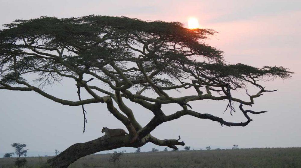 Coucher de soleil dans la nature tanzanienne