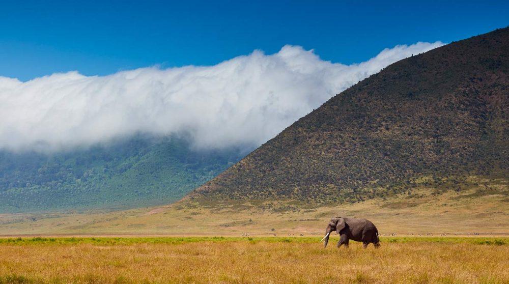 Le Cratère du Ngorongoro en Tanzanie