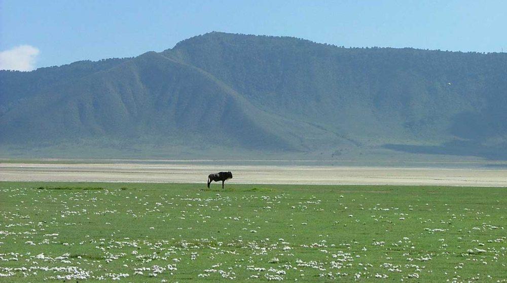 Le Cratère du Ngorongoro à découvrir durant votre circuit Tanzanie en version originale