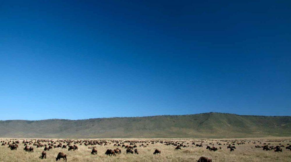 Le cratère du Ngorongoro