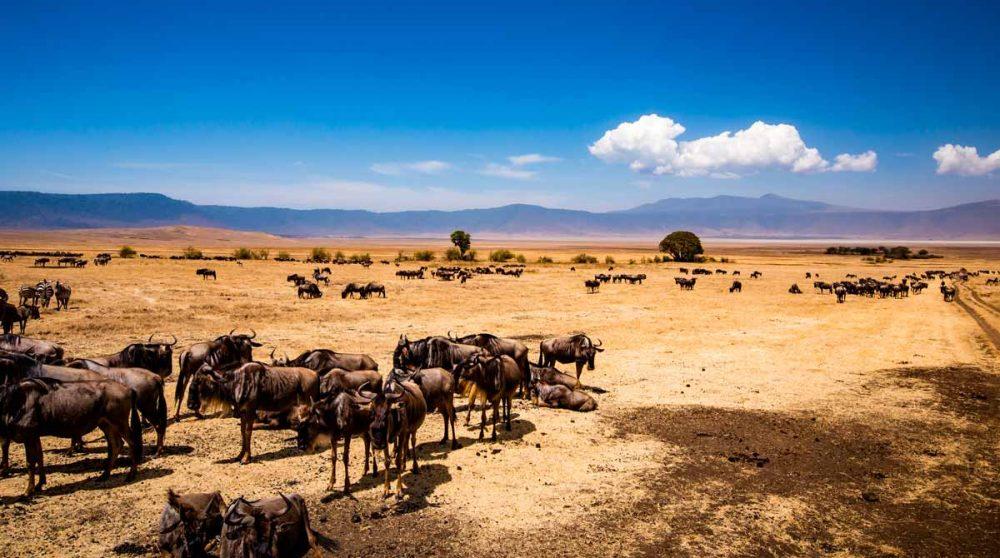 Découvrez le Cratère du Ngorongoro