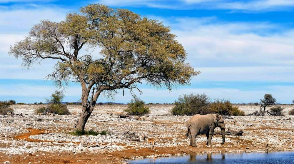 Eléphant à Etosha en Namibie