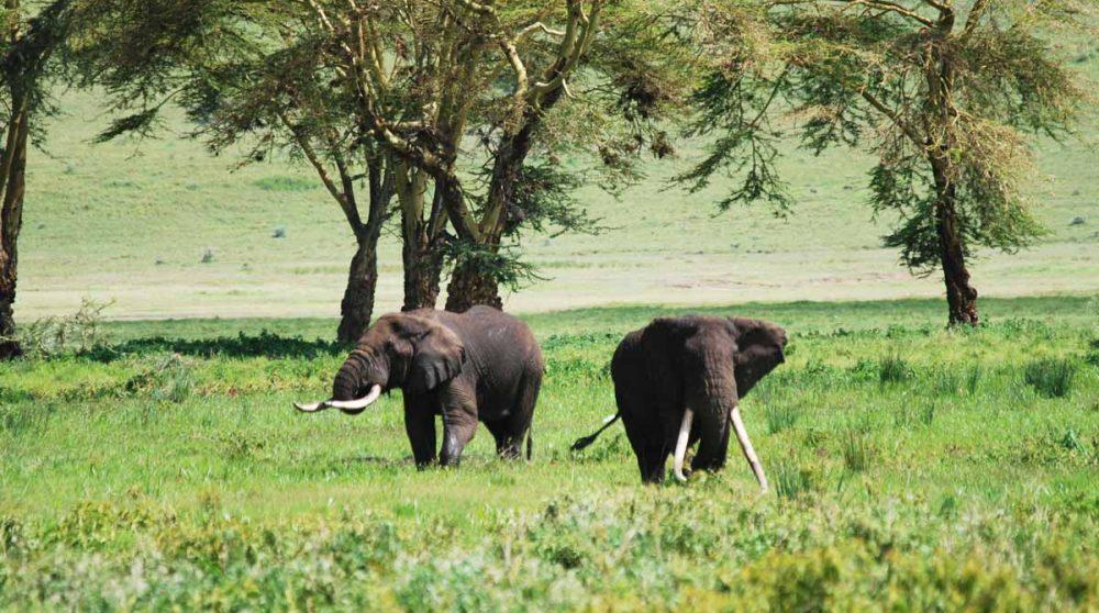 Des éléphants en Tanzanie