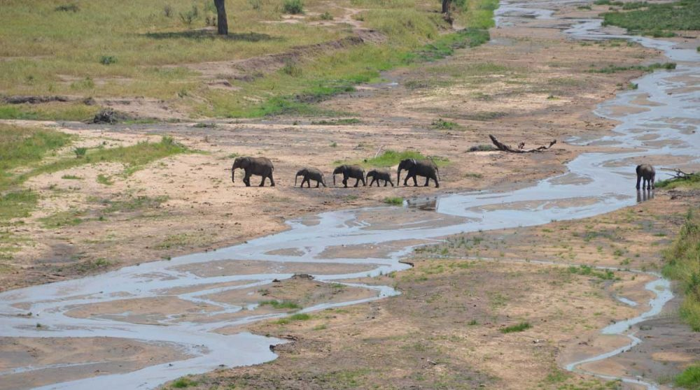 Des éléphants dans la nature tanzanienne