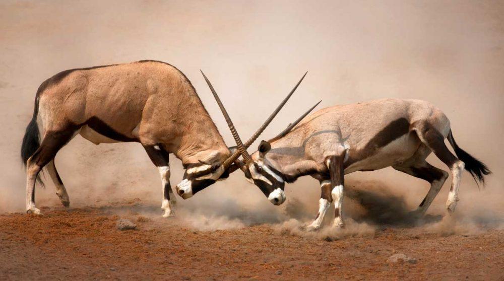 Le Parc National d'Etosha, étape de votre voyage en Namibie