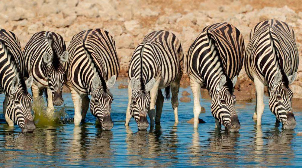 Le Parc National d'Etosha à voir lors de votre voyage