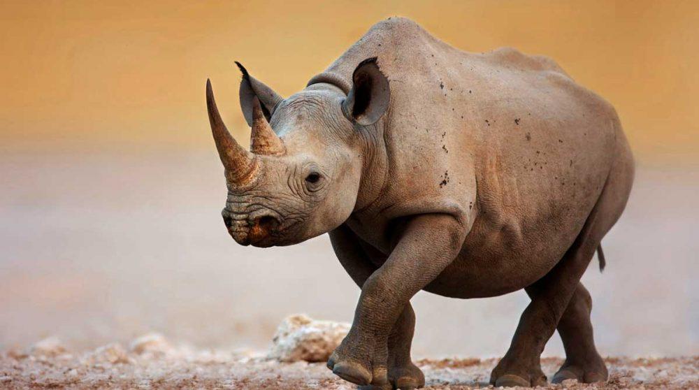 Le Parc national d'Etosha à voir durant votre circuit en Namibie