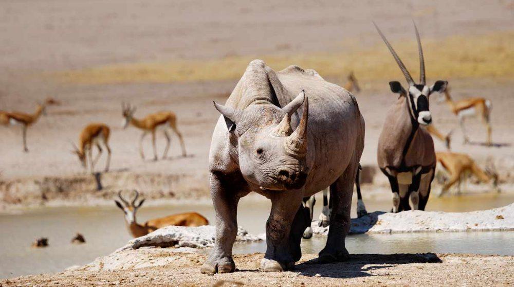 Le Parc National d'Etosha