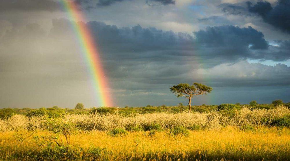 Découverte du Kalahari durant votre circuit en Afrique du Sud