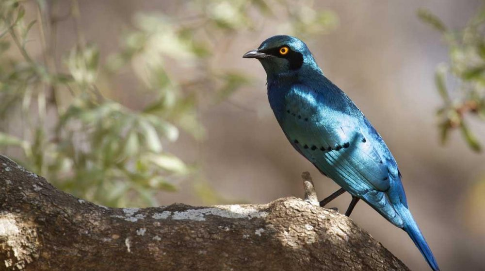 Observation d'oiseaux dans la réserve durant votre séjour