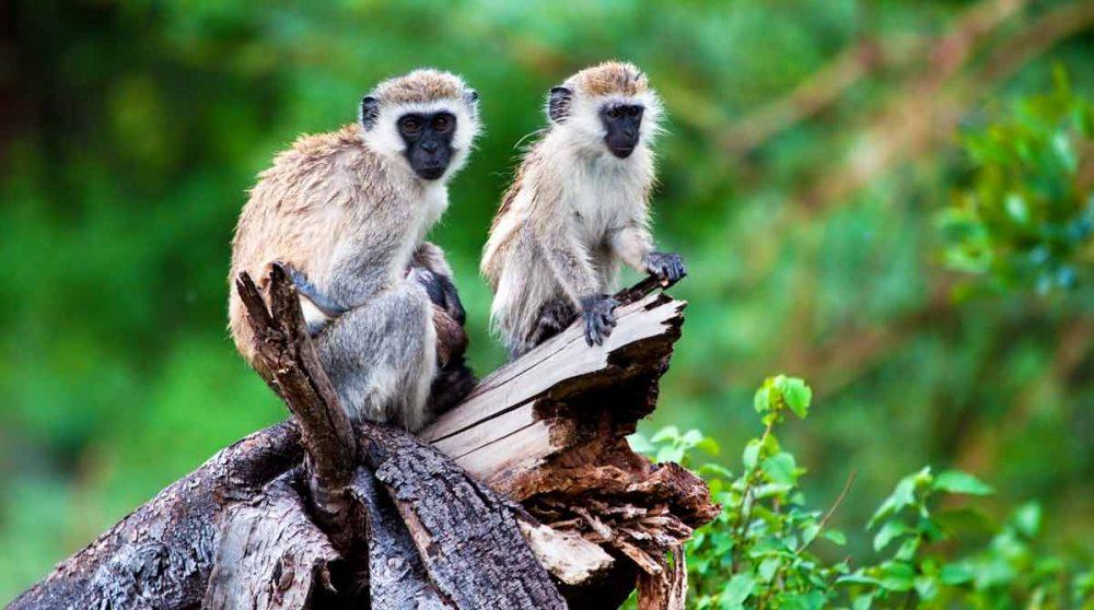 Le Lac Manyara et ses animaux