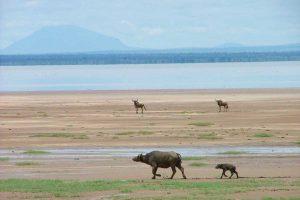 Le Lac Manyara à voir en Tanzanie