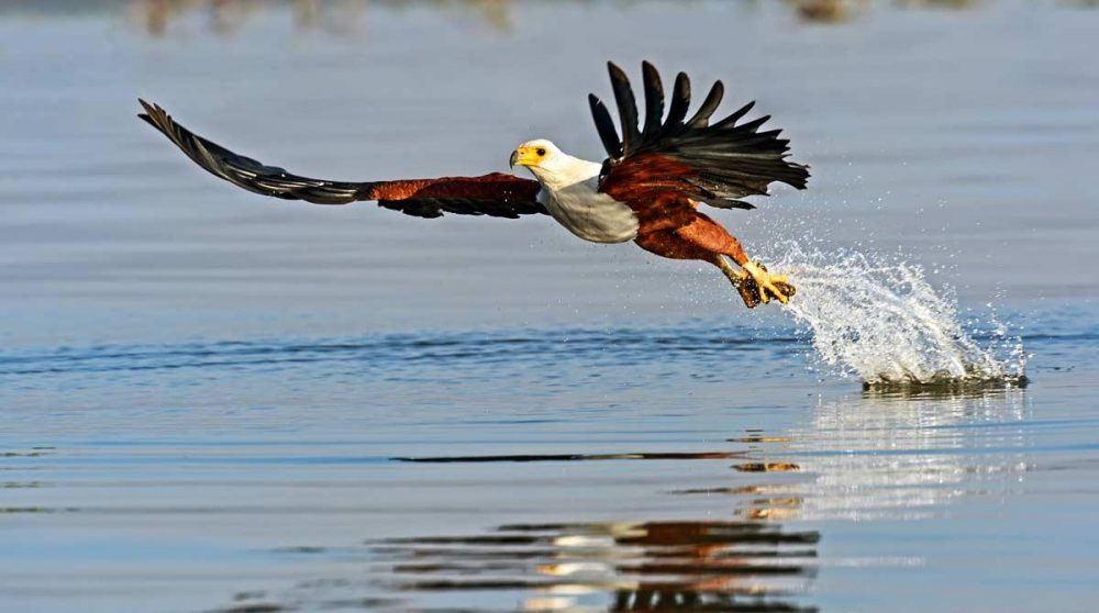Observation d'oiseaux au Lac Naivasha