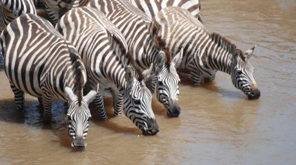 Le Masai Mara à découvrir lors de vortre circuit au Kenya