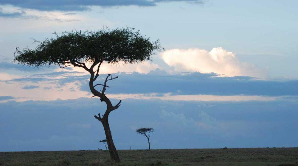 Découvrez le ciel clair du Masai Mara lors de votre circuit au Kenya