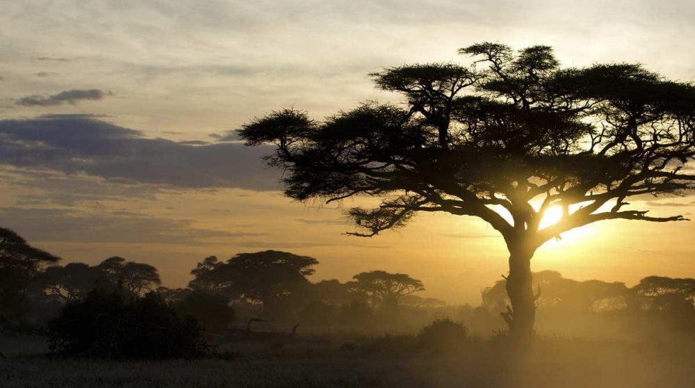 Coucher de soleil dans le parc du Masai-Mara