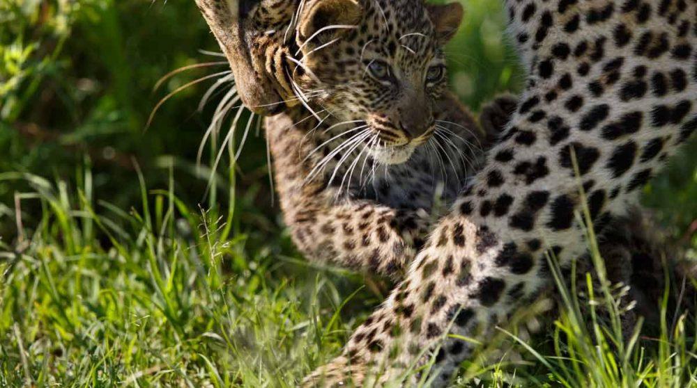 Découvrez le Masai Mara lors de votre circuit au Kenya