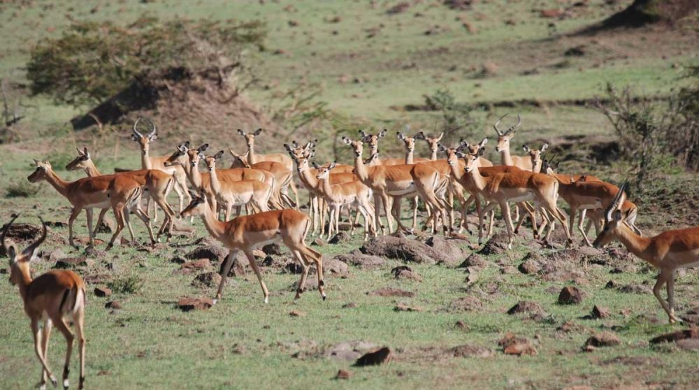Découvrez le Masai Mara et ses paysages durant votre circuit