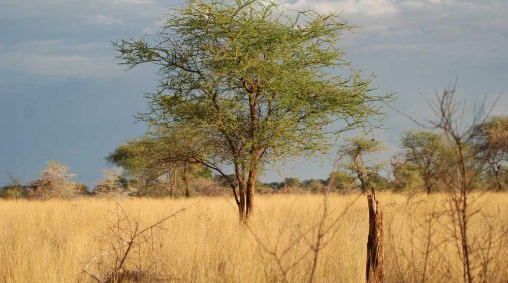 Découvrez le Meru National Park durant votre circuit
