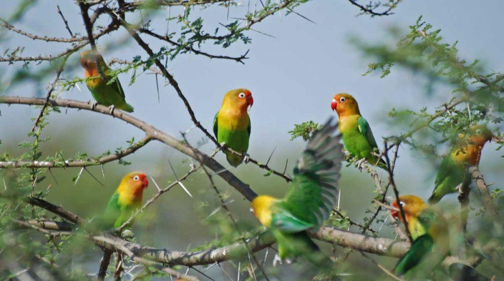 Des oiseaux sur la route entre Olduvai et Ndutu
