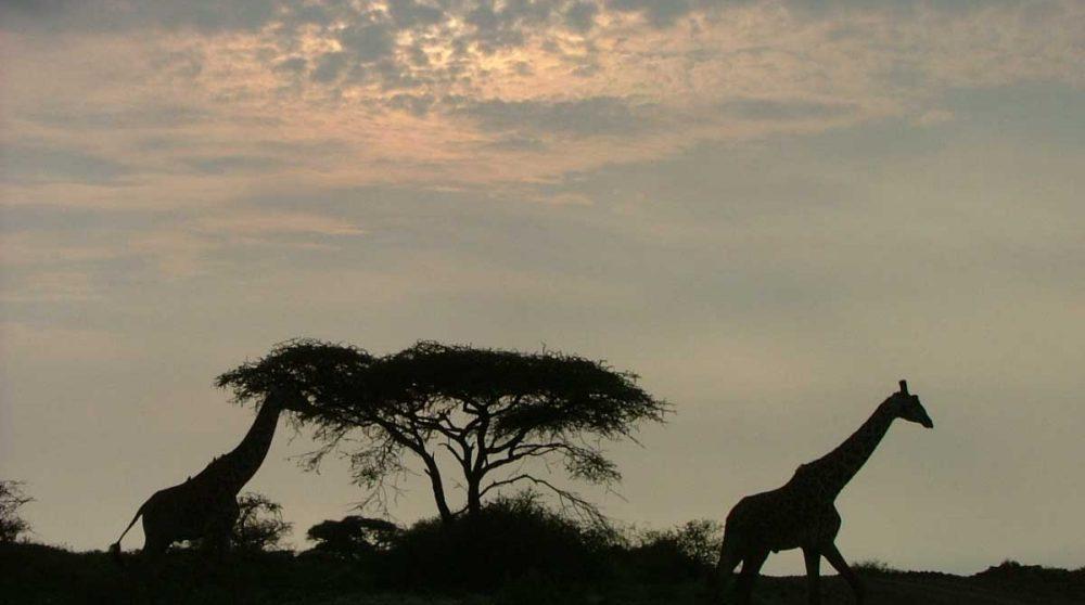 Un paysage au coucher du soleil en Tanzanie