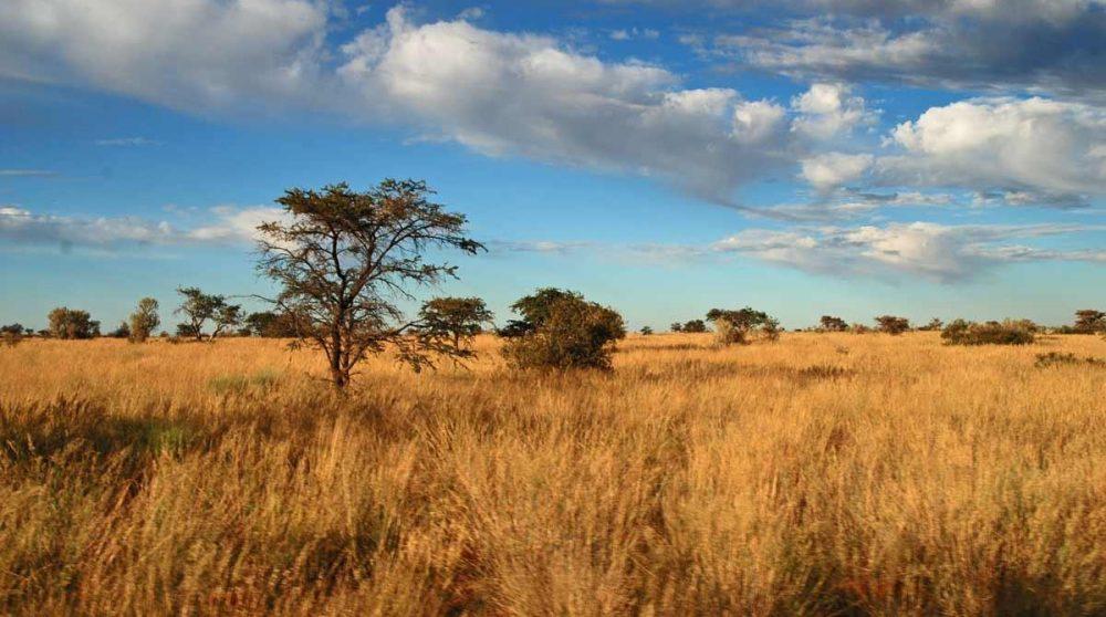Un paysage dans la réserve de Tswalu