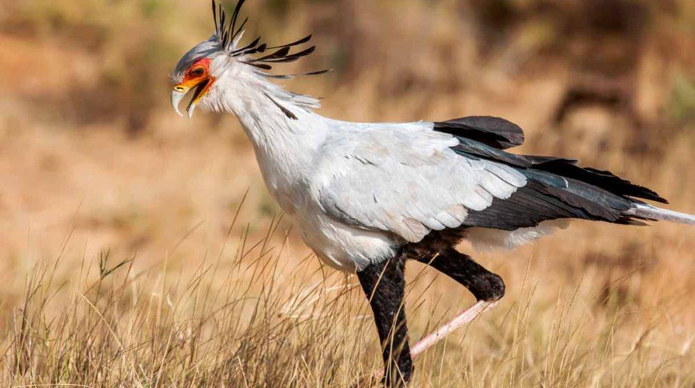 Vous découvrirez le Parc National de Ruaha