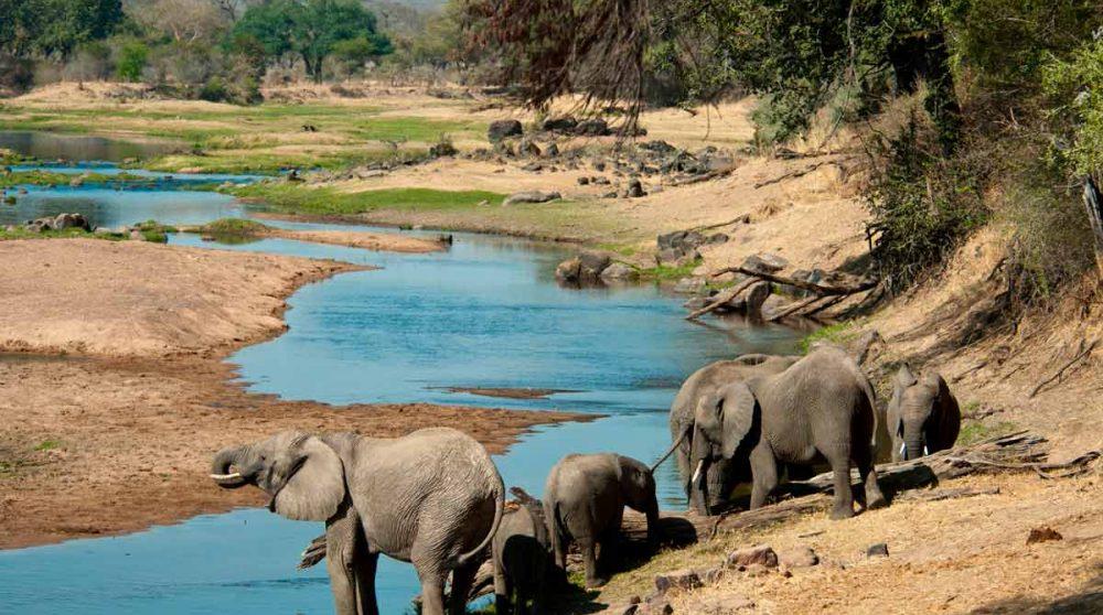 Les éléphants à Ruaha en Tanzanie