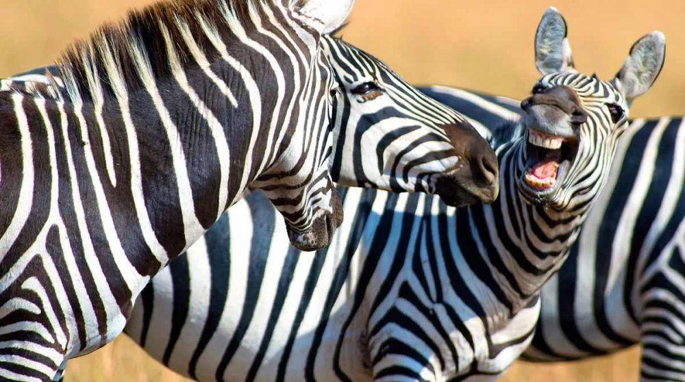 Safari dans le Masai-Mara