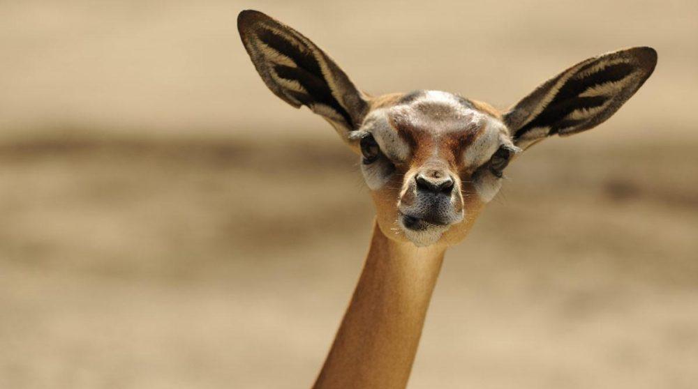 Découvrez Samburu et ses animaux lors de votre circuit Un autre Kenya
