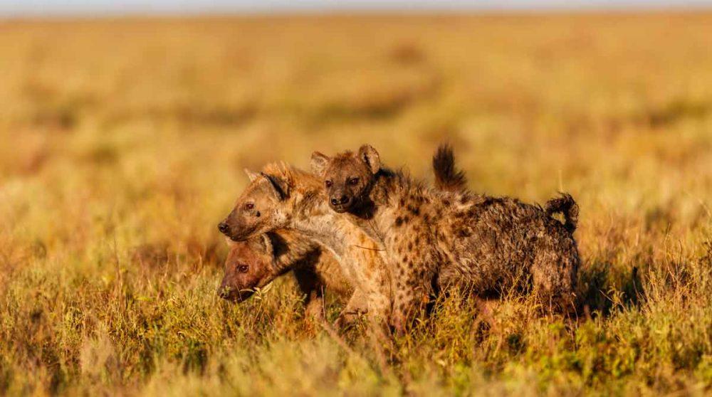 Plongez au cœur de la savane lors de votre circuit en Tanzanie