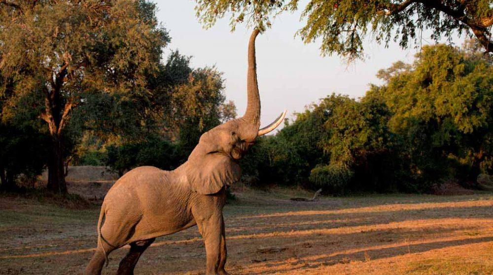 La réserve de Selous en Tanzanie
