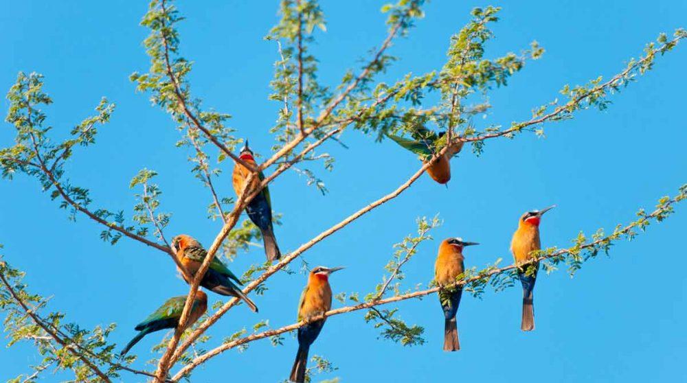 Observation d'oiseaux dans la réserve de Selous