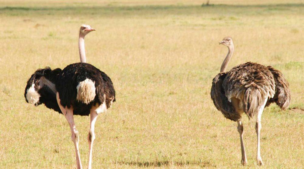 Découvrez les plaines du Serengeti et ses animaux