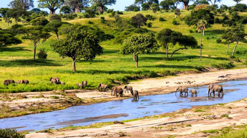 Le Serengeti à découvrir lors de votre circuit en Tanzanie