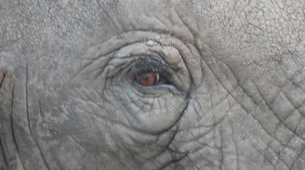 Le Serengeti et ses animaux