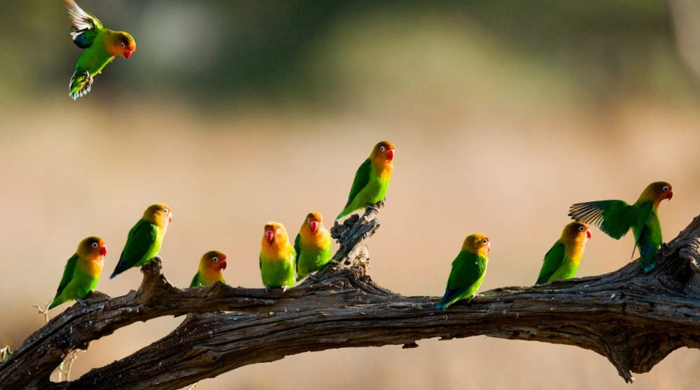 Observation d'oiseaux dans le Serengeti en Tanzanie