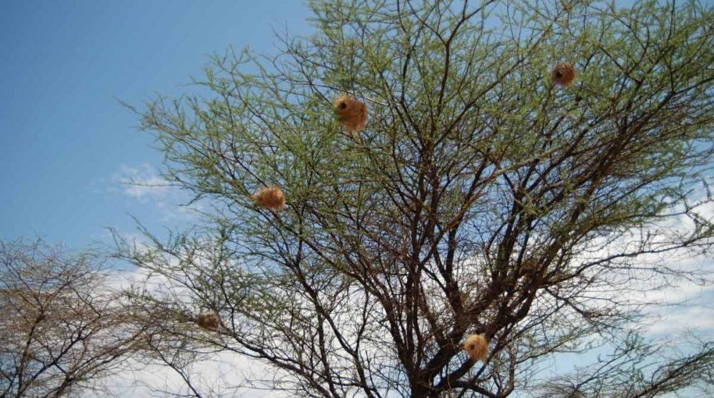 La nature à Shaba au Kenya