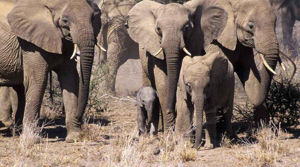 La réserve de Shaba et ses éléphants