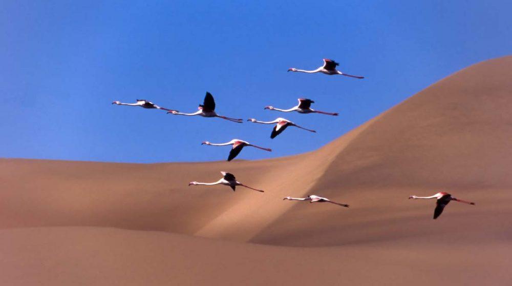 Swakopmund et ses dunes en Namibie