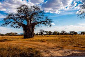 Découvrez la Tarangire et ses plaines