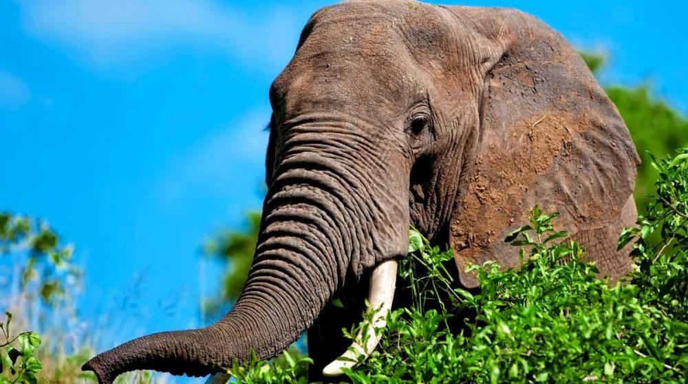 Un éléphant dans le Tarangire, étape de votre circuit en Tanzanie