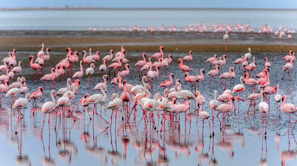 Walwis Bay et ses flamants roses en Namibie à voir lors de votre circuit